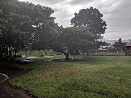 Maliba on a rainy day